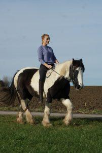 Pferd Dressur Reitsport