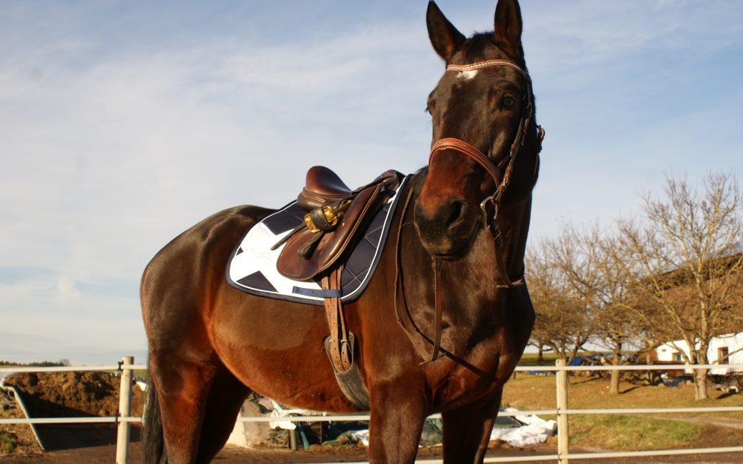 Pferd Reitsport Eskadron