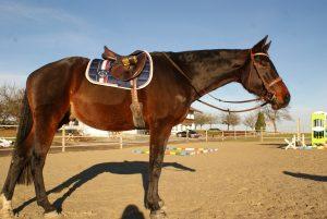 Eskadron Pferd Reitsport
