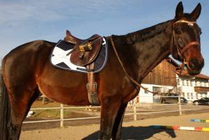 Eskadron Reitsport Pferd