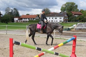 Pferd Reitsport Turnierpferd