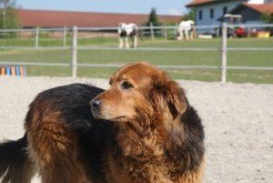 Hund Hunde Pferd