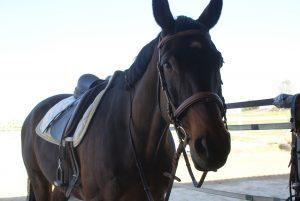 Pferd Reitblog Reitsport