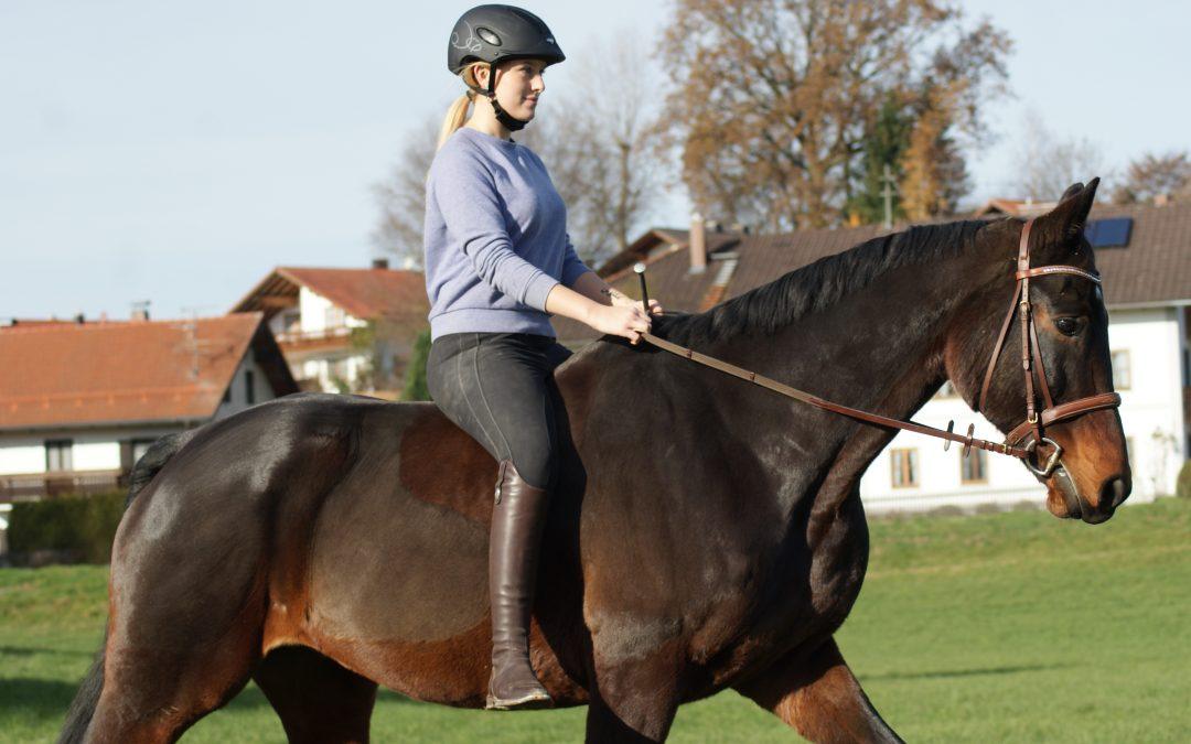 Pferd Reiten Springpferd