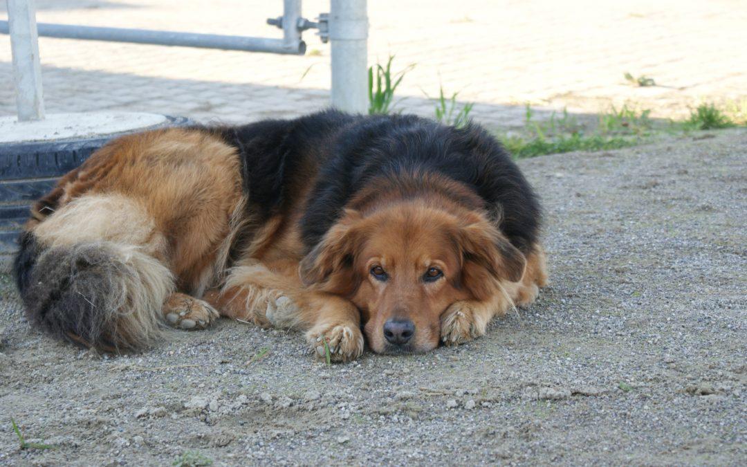 Hund Reitsport Hunde