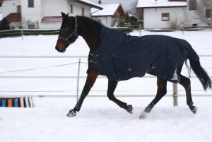 Pferd Reitsport Reiten