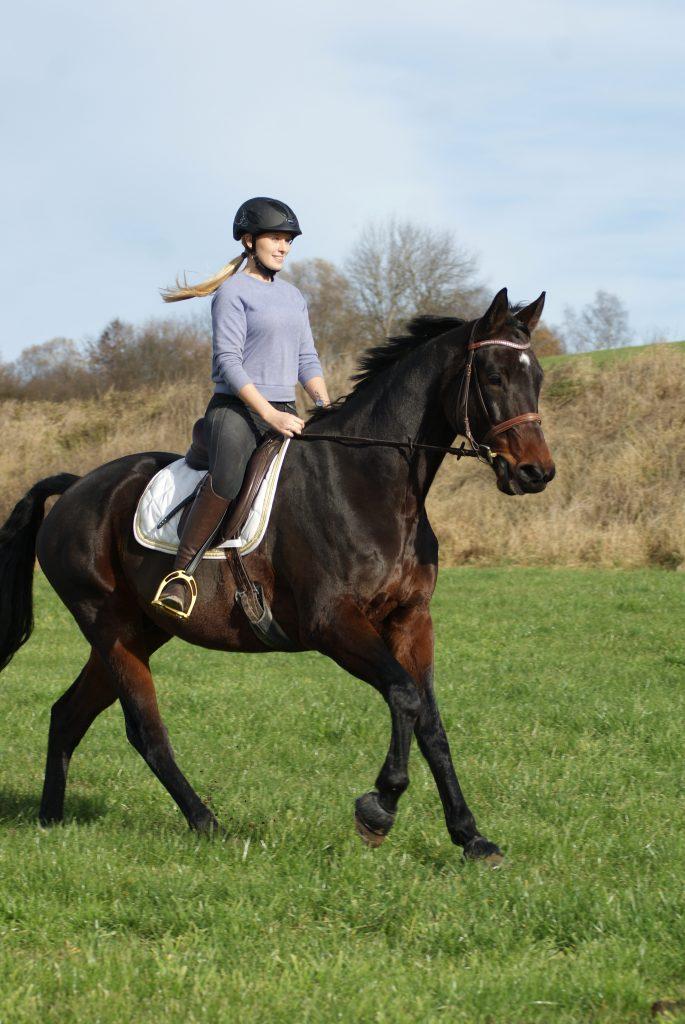 Pferd Reiten Reitsport