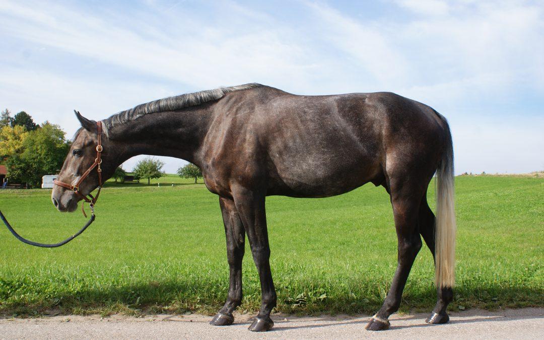 Pferd Reiten Reiter