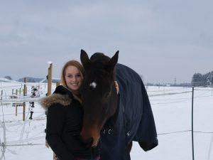 Pferd Reiter Reitssport