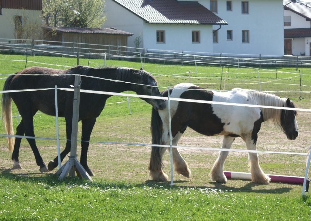pferd pferde reiten
