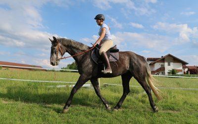 Ein Pferd, das immer Spaß macht!