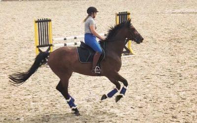 Landgestüt Redefin – ein Traum für jeden Reiter